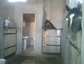 محافظة القاهرة: تجهيز أماكن مؤقتة للخيول بنادى الشمس بعد هدم اسطبلات النزهة