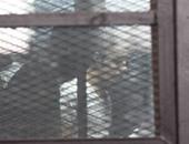 """بعد إحالة 13 للمفتى.. تعرف على 4 جرائم رئيسية تواجه المتهمين بـ""""أجناد مصر"""""""