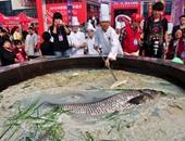 """""""الطهى بالوزن الثقيل"""".. سمكة 80 كيلو بمهرجان الطعام الصينى"""
