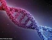 دراسة: معظم أنواع السرطان ناجمة عن أخطاء عشوائية فى الحمض النووى