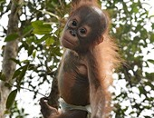علماء فرنسيون يتوصلون لطريقة جديدة لخفض استخدام القردة فى أبحاثهم