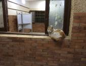 بالصور.. القطط بدل الناخبين داخل لجان مدرسة النصر والوفاء والأمل بالهرم