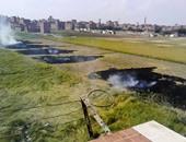 1500 محضر حرق قش أرز بكفر الشيخ