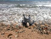 هرب من حرارة الجو فغرق فى مياه نهر النيل ببنى سويف