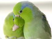 عالمان أمريكيان: العصافير تشعر بحدوث الأعاصير قبل وقوعها