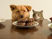 4 احتياطات يجب اتباعها عند رعاية حيوان أليف كفيف