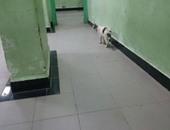 صحافة المواطن.. قارئة تشكو انتشار القطط بمشتشفى القصر بشبين الكوم