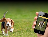 """تطبيق لحساب نسبة السعرات الحرارية فى طعام كلبك """"الدايت مش بس للبنى آدمين"""""""
