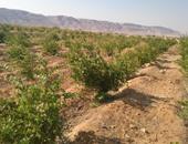 مركز أبحاث الصحراء: نعمل على إنجاز البرنامج الوطنى لمكافحة التصحر