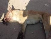 النيابة تحقق فى اتهام شاب بشنق كلب داخل بلكونة شقته وتعذيبه فى مدينة نصر