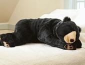 الدبة اللى دفت صاحبها.. شركة يابانية تقدم غطاء الدب لتدفئة عالية المستوى