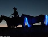 بالفيديو.. نظام ذكى جديد لحماية راكبى الخيول من السقوط والإصابات