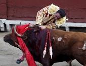 مصارعة الثيران.. أرباح خيالية تدعم اقتصاد أسبانيا.. تعرف عليها