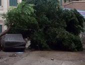 سقوط شجرة بطريق المنصورة ـ بلقاس وتعطل حركة المرور
