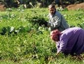 """""""الزراعة"""" تنظم ورشة عمل حول الزراعة الرقمية وتغير المناخ.. اعرف التفاصيل"""