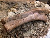 بالصور.. علماء الحفريات يكشفون عن أول جمجمة لطفل الديناصور