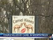 بالفيديو..جمل يدهس شخصين حتى الموت فى ولاية تكساس الأمريكية