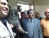 خبراء الحياة البرية يسلمون وزير البيئة النمر الجبلى بحلايب بعد تحنيطه