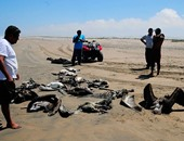 محافظة شمال سيناء تعلن ضوابط صيد الطيور المهاجرة