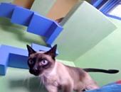 بالفيديو.. رجل ينفق 40 ألف دولار لتحويل منزله إلى متاهة إرضاءً لقططه