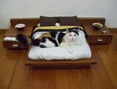 بالصور.. قطط مرفّهة تعيش حياة أفضل من بعض البشر