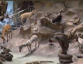 بالفيديو.. أكبر متحف حيوانى فى الشرق الأوسط بحديقة الجيزة.. محنطات وزواحف  نادرة