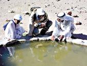 """محمد شاهين.. المهنة """"مدرب مهارات بقاء"""".. يواجه الرمال المتحركة ويأكل ثعابين وعقارب"""