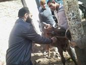 تنظيم قوافل بيطرية لـ4 قرى بالمنيا