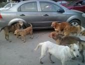 صحافة المواطن: قارئ يشكو من انتشار الكلاب فى شوارع الجمالية بالدقهلية