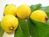 """اليوم.. """"تصديرى الحاصلات الزراعية"""" ينظم لقاء حول منظومة صادرات الجوافة"""