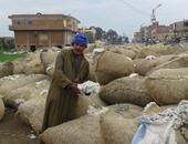 زراعة سوهاج: توريد 679 قنطارا من محصول القطن إلى المجمعات