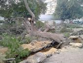 صحافة المواطن.. سكان هليوبليس يتضررون من قطع الأشجار وتشويه الشوارع