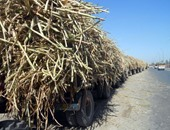 صرف 90 % من مستحقات مزارعى القصب بمصانع سكر نجع حمادى بدءا من الإثنين