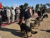 تعرف على تاريخ الاستعانة بالكلاب البوليسية لحفظ الأمن فى مصر