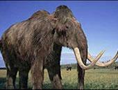 علماء يستخرجون أقدم حمض نووى لحيوانات الماموث المنقرضة.. عمره 1.2 مليون عام