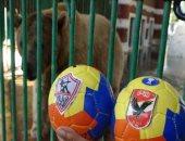 """بالفيديو.. الدب """"حسونة"""" يتوقع نتيجة قمة نهائى كأس مصر بين الأهلى والزمالك"""