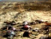 الزراعة: ضبط عصابة بحوزتها 50 جثة حمار لبيع جلودها فى كفر الشيخ