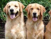 دراسة حديثة: الكلاب تفسر الكلام ونبرة الصوت كالبشر