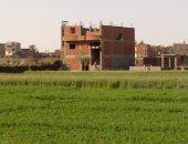 """""""القليوبية"""" تؤكد التعامل مع مخالفات البناء على الأراض الزراعية"""