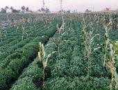 مصر تشارك فى مؤتمر دولى حول الزراعة والغذاء تعقده إيسيسكو بالخرطوم