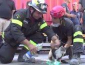 بالفيديو.. السلطات الإيطالية تنقذ قطا ظل محتجزا تحت أنقاض الزلزال 6 أيام