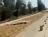 بالفيديو.. مزارعون بفترشون الطريق فى البحيرة بمحصول السودانى لتجفيفه