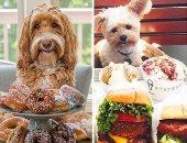 """كيف تقضى الكلاب على انستجرام """"الويك إند""""؟ صور تثير الحسد بين الأكل والأنتخة"""