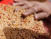 الإحصاء: 283.1 مليون دولار حجم استيراد مصر للقمح والسكر والفحم بمايو 2017