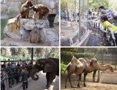 إحالة مسئول المخازن بحديقة الحيوان للجنايات لاتهامه باختلاس 1.5 مليون جنيه