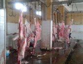 الطب البيطري بكفر الشيخ: فتح المجازر مجانا من 29 أغسطس حتى آخر أيام العيد