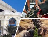 21 معلومة من دار الإفتاء المصرية عن أضحية عيد الأضحى المبارك.. تعرف عليها