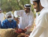 حمد بن خليفة ينشر صورة ذبحه الخروف على إنستجرام.. ومعلقون يسخرون