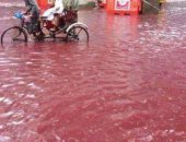 """بالصور .. """"أضاحى"""" العيد تحول شوارع بنجلادش إلى أنهار من الدماء"""