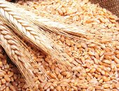 مؤسسة الحبوب السعودية تشترى مليون طن شعير فى مناقصة عالمية